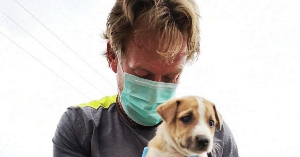 Pen Farthing escapes Afghanistan with 200 dogs and cats - a timeline of events