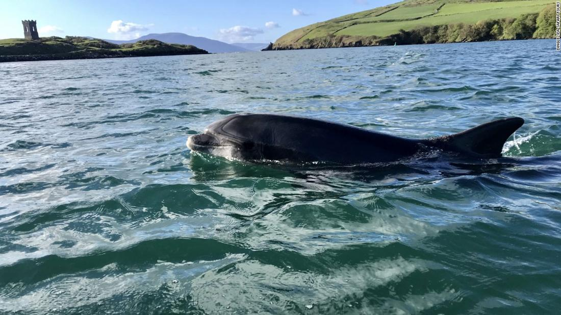 A dolphin's decades-long stay made this Irish town famous. A year after he left for good, Dingle bids farewell to Fungie